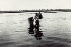 powódź-1934-r